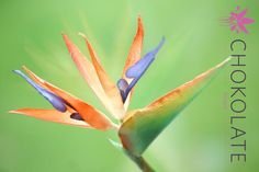 Wafer Paper Bird of Paradise - Strelitzia - Cake by ChokoLate