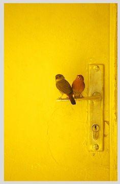 yellow | birds