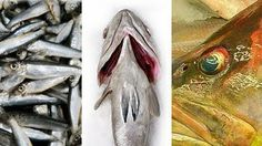 Confused over Fish names? | The treasure house of recipes - Flavours