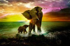 A representação do amor com uma combinação perfeita de cores.