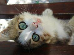 48 Kittens Giving You Kitty-Cat Eyes