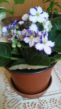 Flowers, Parma, Gardening, Plants, Violets, Lawn And Garden, Royal Icing Flowers, Flower, Florals