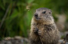 Can I give you a flower? by ranieripaluselli #animals #animal #pet #pets #animales #animallovers #photooftheday #amazing #picoftheday