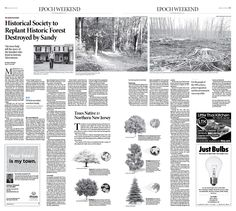 How Trees Tell the Story of 19th Century Millionaires Epoch Times #newspaper #editorialdesign
