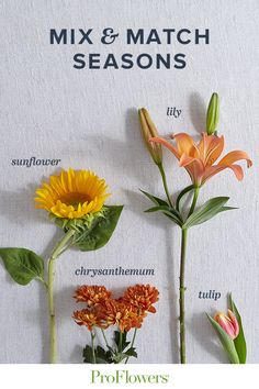 Although it's fall, we love incorporating summer flowers into our bouquets for an unexpected twist! Flower Meanings, Fall Photos, Chrysanthemum, Summer Flowers, Tulips, Bouquets, Roots, Centerpieces, Thankful