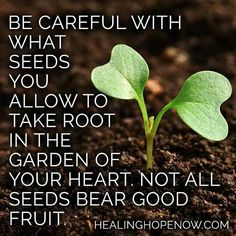 Be careful what seeds take root said garden quotes, inspirat Garden Quotes, Garden Sayings, Best Fruits, Good Advice, Christian Quotes, Christian Life, Positive Quotes, Positive Thoughts, Spiritual Quotes