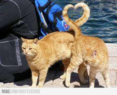 Orange tabby Love...