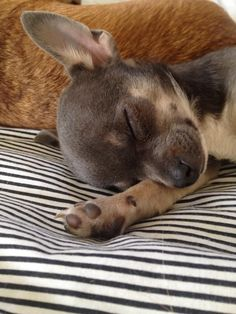 .Oh Boy ! Im worn out !!! xxxx Yuppypup.co.uk provides the fashion conscious with stylish clothes for their dogs. Luxury dog clothes and latest season trends, Dog Carriers and Doggy Bling. Next Day Delivery. Please go to http://www.yuppypup.co.uk/