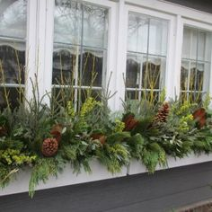 Window box with spruce tops