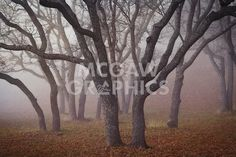 Pilot Road Trees