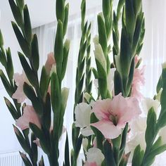 Blush interior styling II Gladiolus II Pink and white II fresh flowers II home deco