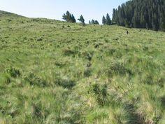 Crest Trail, Ruidoso NM