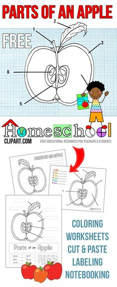 life cycle worksheets | 1st Grade Science Stages in the ...
