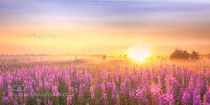 Field of dreams  by jmatz IFTTT 500px flowers landscape sunrise light sunshine art dreamy pastel fine art meadow digital art http://ift.tt/1Uj4qyX
