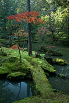 The moss gardens of Saiho-ji Temple in Kyoto JapanI'm not sure why I'm so fascinated by moss but I do want a moss garden. The moss gardens of Saiho-ji Temple in Kyoto JapanI'm not sure why I'm so fascinated by moss but I do want a moss garden. Beautiful World, Beautiful Gardens, Beautiful Places, Simply Beautiful, Kyoto Japan, Japan Japan, Japan Art, Japan Sakura, Japanese Garden Ornaments