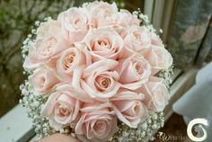 Hand tied bouquet of blush pink roses with gypsophila collar