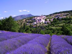 Provence town - Aurel, Provence-Alpes-Cote-dAzur