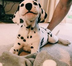 Top Friendliest Dog Breeds In The World! Check out top 5 best most friendly dog breeds. Friendliest dog breeds for kids! Cute Funny Animals, Cute Baby Animals, Animals And Pets, Cute Puppies, Cute Dogs, Dogs And Puppies, Doggies, Puggle Puppies, Dalmatian Puppies
