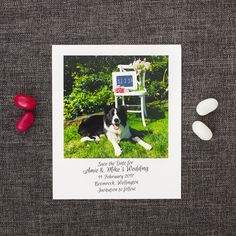 A fun way to ensure your guests Save the Date: a Polaroid Save the Date invite. This Polaroid save the date is given a modern twist with a white background. Motto, Green Gold Weddings, Save The Date Wording, Green And Gold, Emerald Green, Fun Wedding Invitations, Dog Pictures, Wedding Planning, Dating