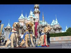 Canine Angels invade Disneyland - a day of training future assistance dogs at Disneyland (article, photos, and video, via MiceChat)