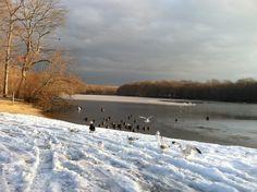 Millers Pond (duck pond) in Smithtown