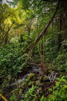 Hilo Hawaii #visionsbycarolphotography Photography, Photograph, Fotografie, Photoshoot, Fotografia