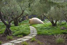 """very old European Olive trees, or Olea Europaea underplanted w/ Red Fescue or """"Festuca rubra"""" a grass that does not need to be mowed & takes less foot traffic than a lawn grass (could also use eco grass for similar effect)  -- Saratoga Estate -- San Francisco - Kikuchi & Associates"""