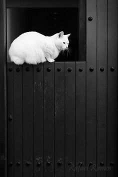 Cat behind farm door - Secret Dreamlife                              …