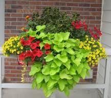 windowbox plant combos - Google Search