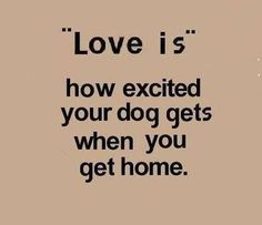 """Love is"" how excited your dog gets when you come home"