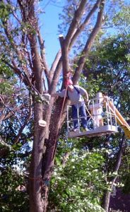 Tree Removal Safety Tips - Imagine cutting down a tree all on your own. You've got your equipment, your neighbor is over to help out, and you're ready to go. However, it ends up being a painstaking process that takes hours to complete.