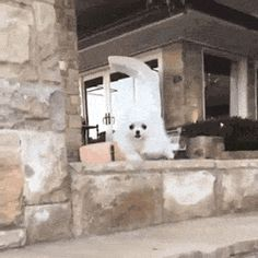 funny-gif-dog-falling-stairs-explosion