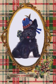 Scottish Terrier Tartan card, design taken from an antique card from the 1900's.
