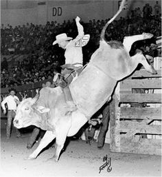 Cowboy Freckles Brown grasps the rope atop bull #69 in 1966 at the National Finals Rodeo in Oklahoma City. Photo by Ferrell Butler, National Cowboy & Western Heritage Museum