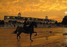 Devon Horse Show at sunset - Gypsy Mare Studios - Saddleseat