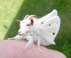 27 Terrifying Animal Hybrids That Will Fuel Your Nightmares For Years To Come