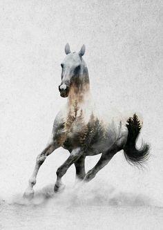 Andreas Lie Horses