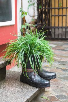 Die einzige Regel bei der Verwendung von Schuhen und Stiefeln als Pflanzer ist kreativ und spielerisch sein. Dieses Paar schwarze Gummistiefel dient als Pflanzer Ziergras zu halten. Am Rande der Ausgangspunkt einer Treppenstufe repariert, ist eine Stammes-Schnur um einen der die Stiefel ein wenig von Spunk hinzufügen gebunden.
