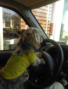 Tyson driving