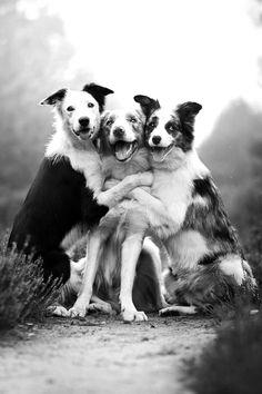 Three amigos; Sombras - Shadows