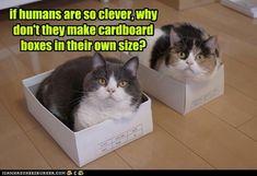 Kitties 1 - Hoomins 0