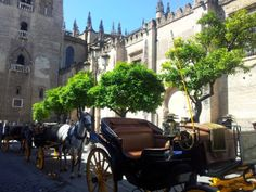 precio 45€ 45minutos Parada Oficial junto a la Catedral de Coches de Caballo Antique Cars, Street View, Antiques, Walks, Paths, Palaces, Towers, Sevilla, Horses