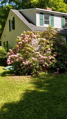 Gorgeous Rhododendron at home