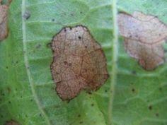 Полный Каллы: уход в домашних условиях - особенности экзотического растения (30+ Фото) +Отзывы