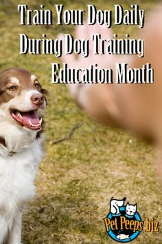 February is Dog Training Education Month. Here's a list of training activities you can do each day!