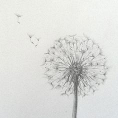 Image result for pencil drawing dandelion puff