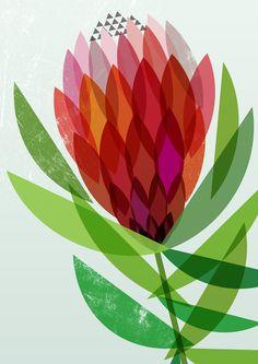 Ink & Spindle - Set of 3 'Proteaflora' Artist Prints Flowers Illustration, Illustration Blume, Botanical Illustration, Art Floral, Floral Prints, Tissue Paper Art, Paper Poms, Atelier D Art, Art Plastique
