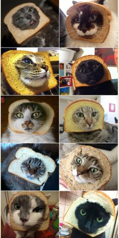 Haven't been to TheMockDock.com?  You are SO missing out.  Case in point:  inbred cats.