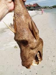 Vampire squid.look at those teeth!!