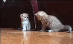 #10707571 - Gatos haciendo cosas